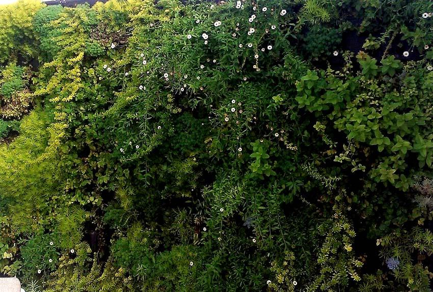 Jardin Vertical en Palma 2