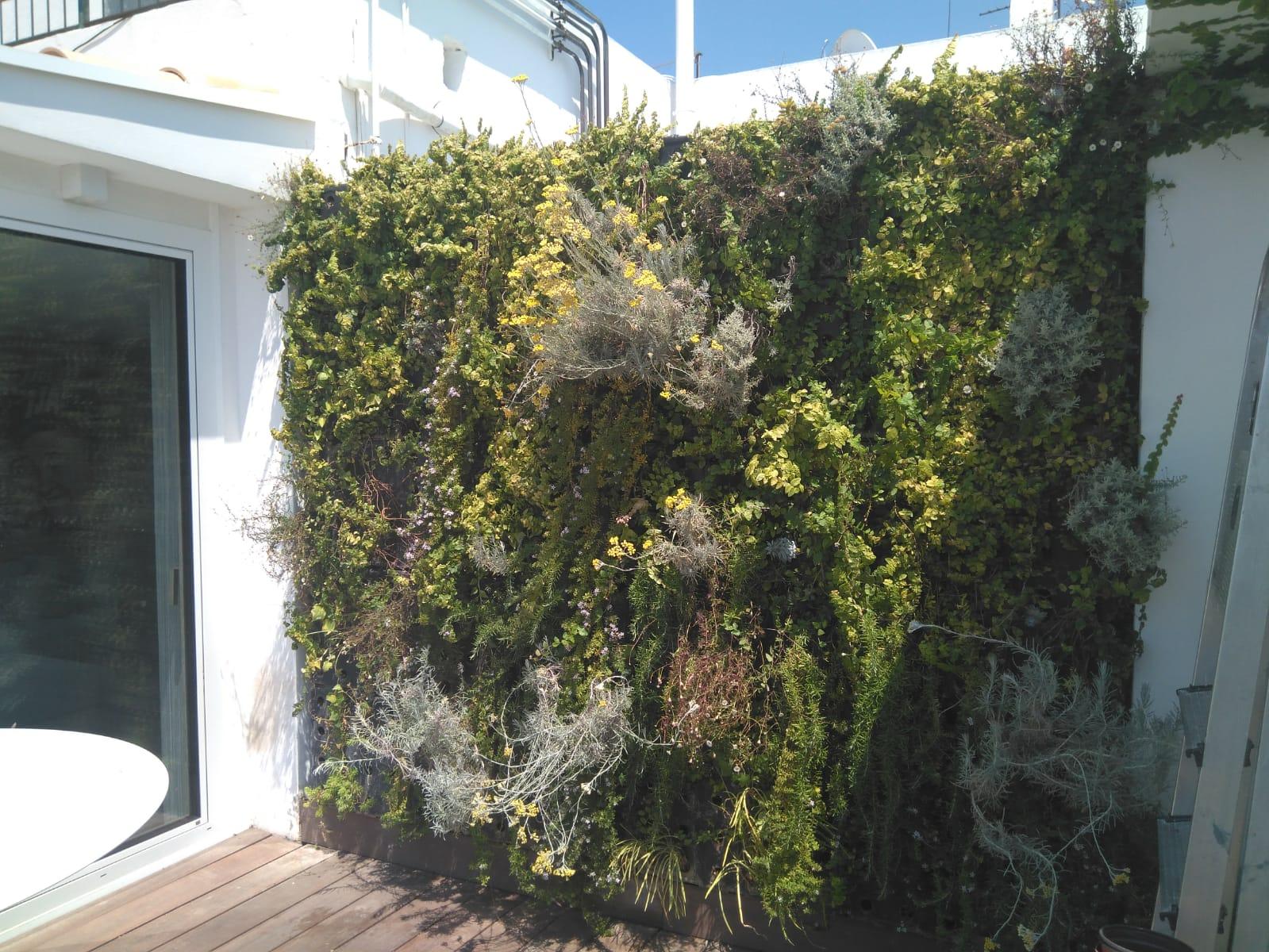 Jardin Vertical en Palma 4
