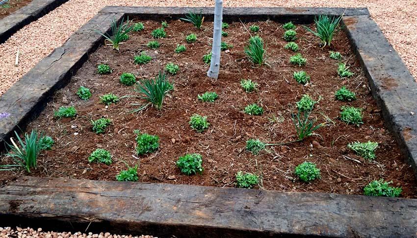 jardin funcional Palma 1