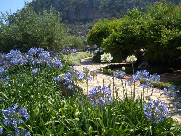 jardin-mediterraneo