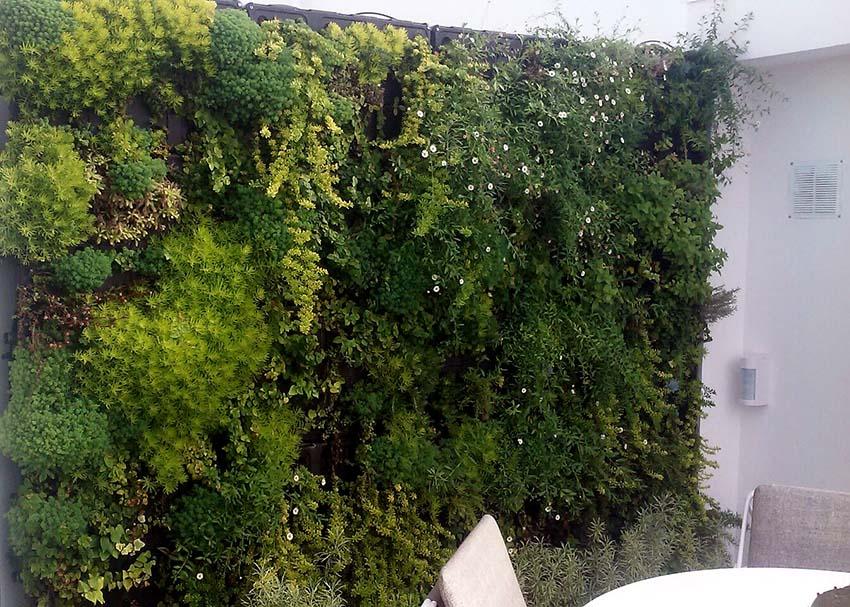 Jardin Vertical en Palma 1