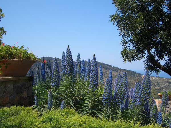 jardin-mediterraneo3